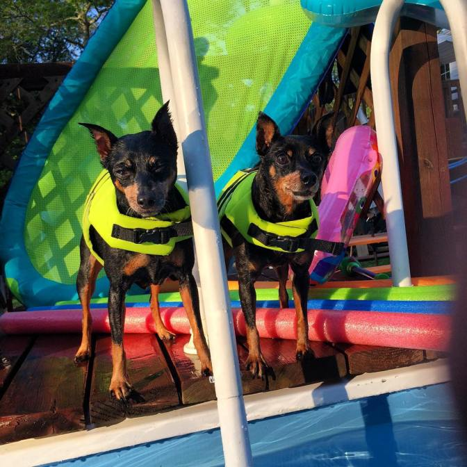 Tracy's Tips: Protect your pets and animals from swimming pool dangers.